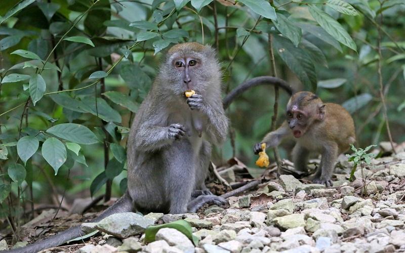 20180405-ubin monkeys.jpg
