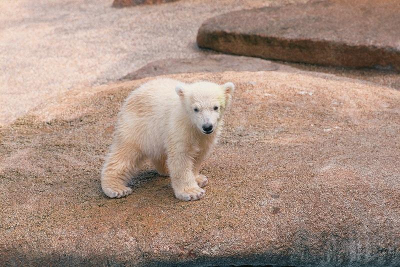20180425-Bear Cub small.jpg