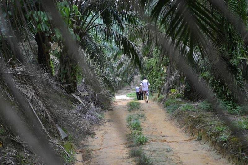 rural malaysia.jpg