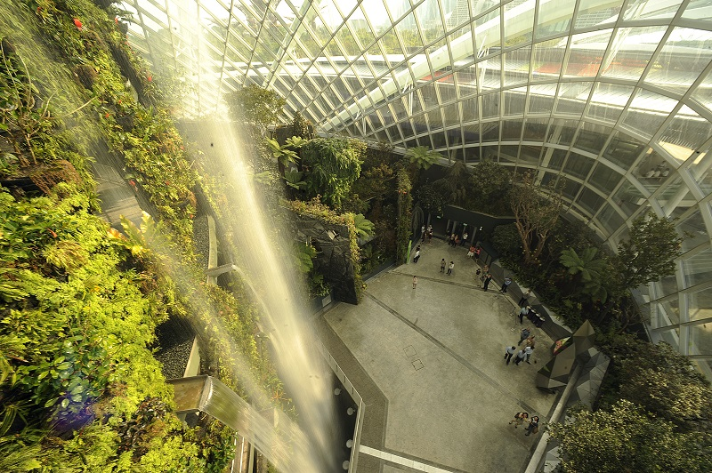 cloud forest waterfalls.jpg