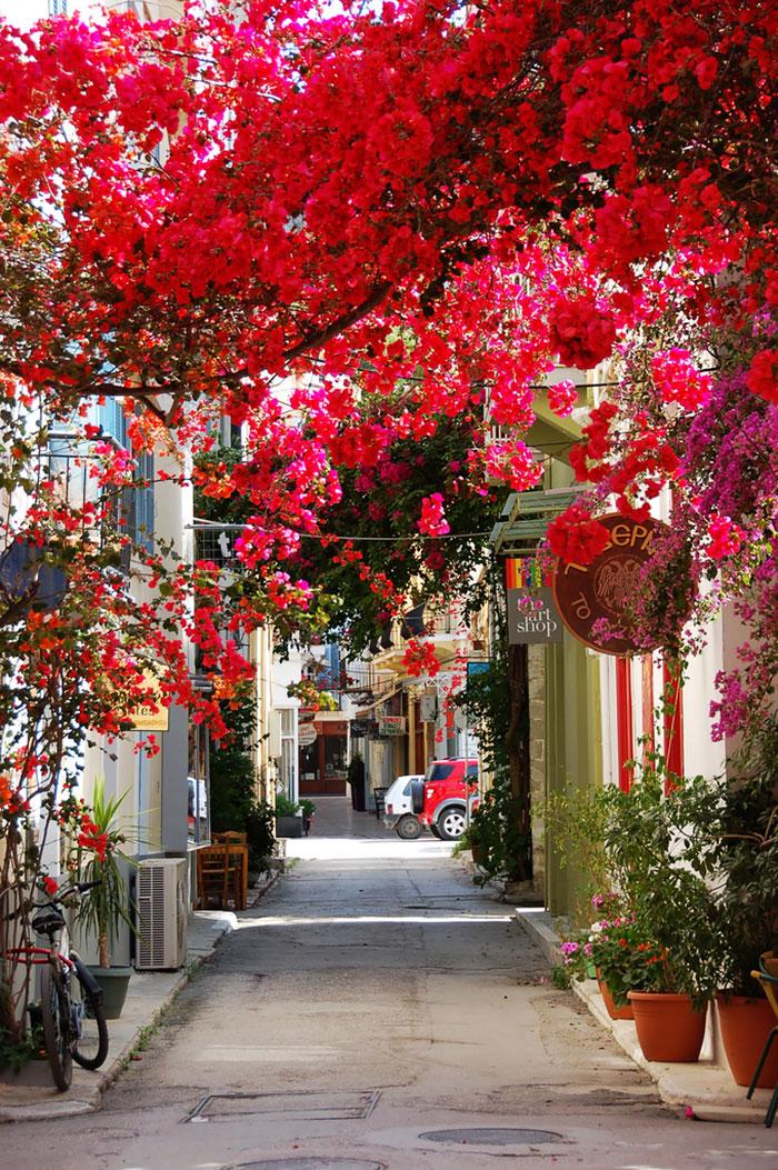 beautiful-streets-trellis-canopies-10__700.jpg