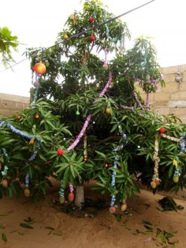 Mango Christmas Tree.jpg