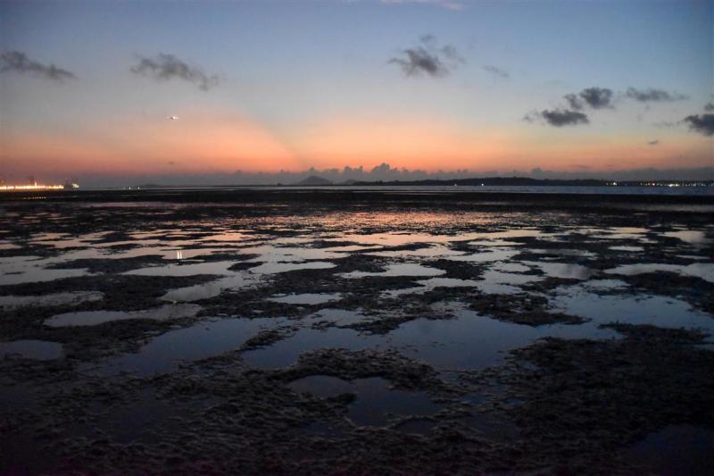 20190301-Pulau Ubin ChekJawa02.jpg