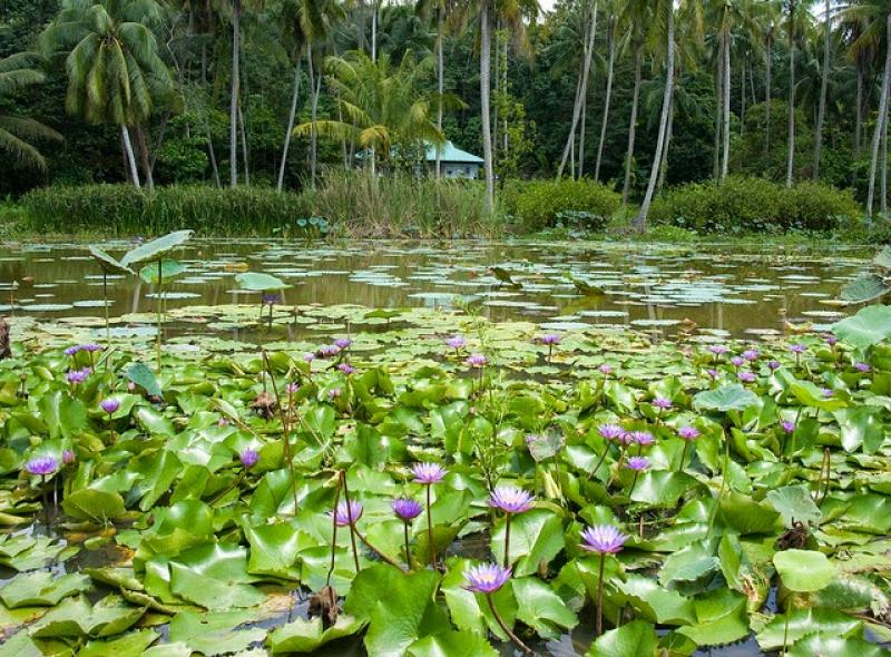 20190301-Pulau Ubin Sensory Trail Pond.jpg