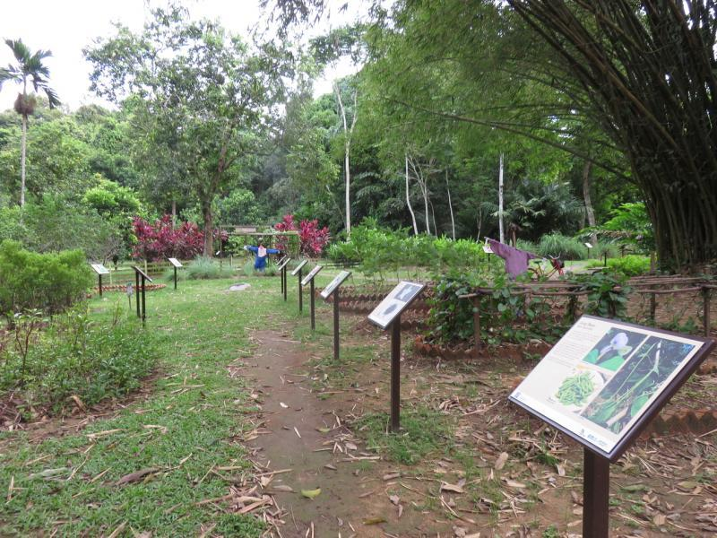 20190301-Pulau Ubin Sensory Trail02.jpg