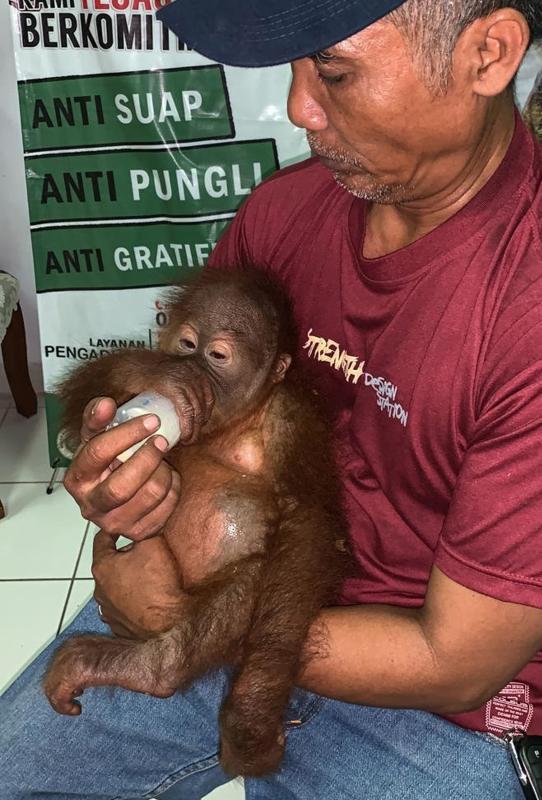 20190503-baby orangutan.jpg