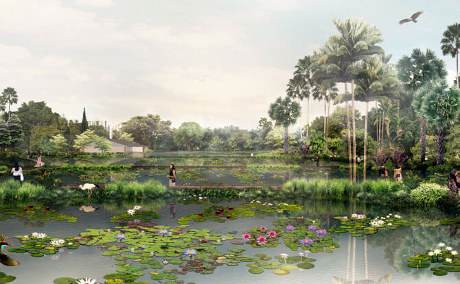 Aquatic Garden nparks.jpg