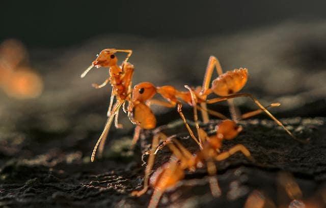 050719 ant cover.jpg