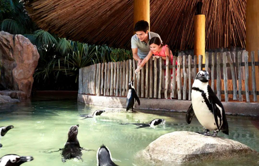 jurong penguin feeding.jpeg