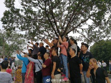 20190911重庆人们站起来.jpg