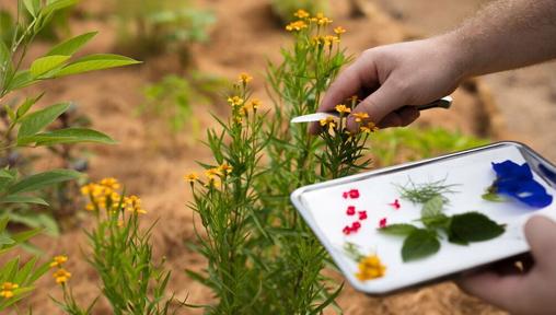 20190920-try herbs.jpg