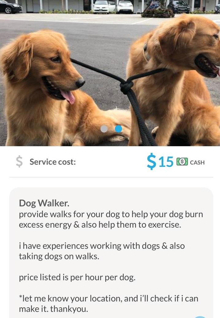20191106-dog walker.jpg