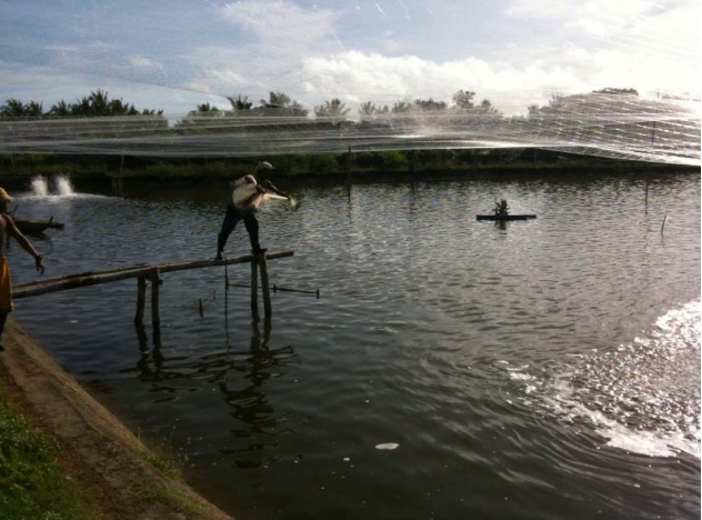 20200106-prawn pond.png