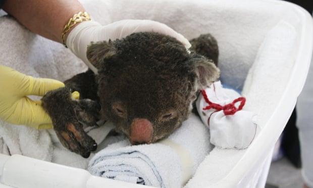 20200107-koala mitten.jpeg