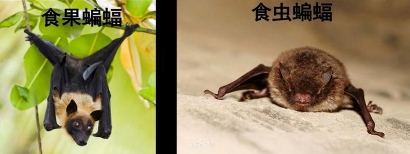 20200130-bats.jpg