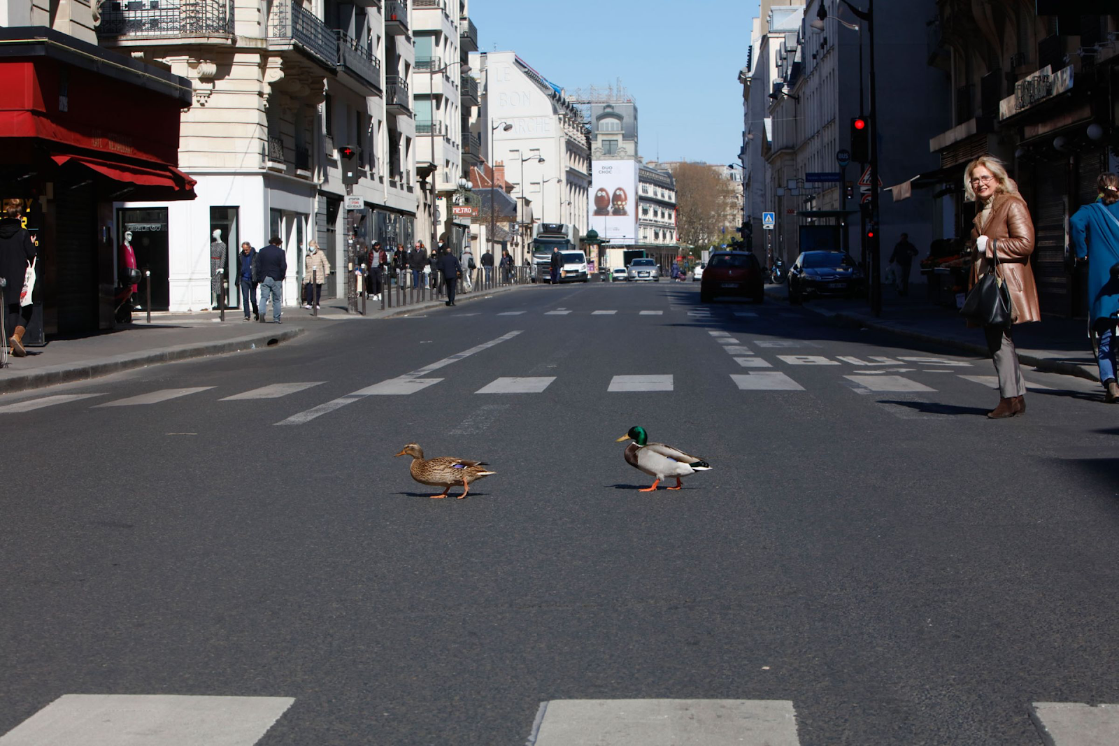 20200413-france ducks.png