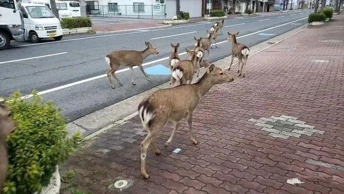 20200413-nara deer3.png