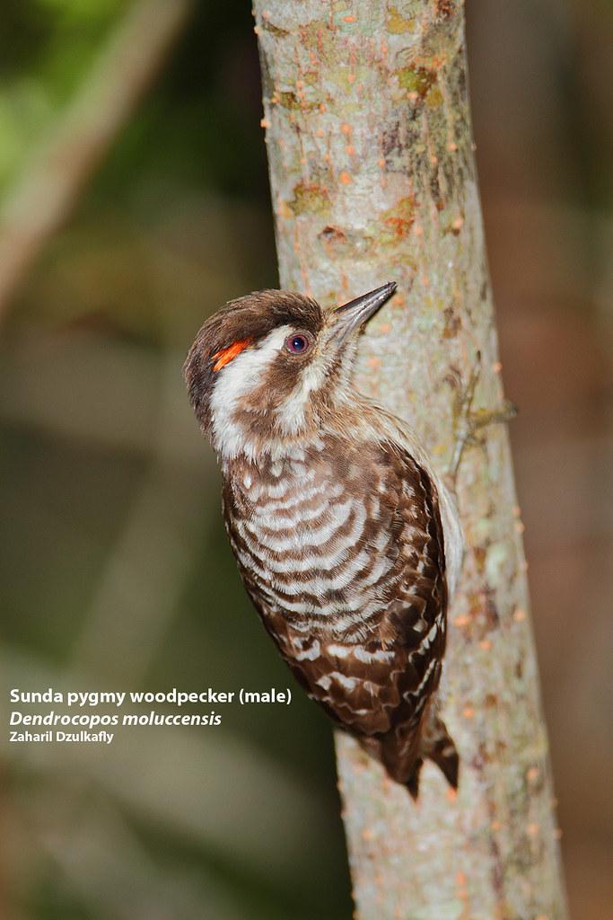 20200423-woodpecker2.png