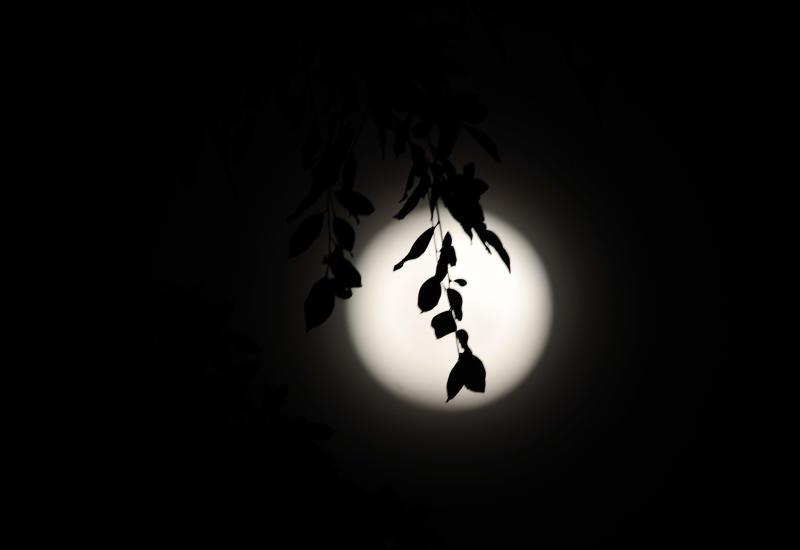 20200423-asian moon.jpg