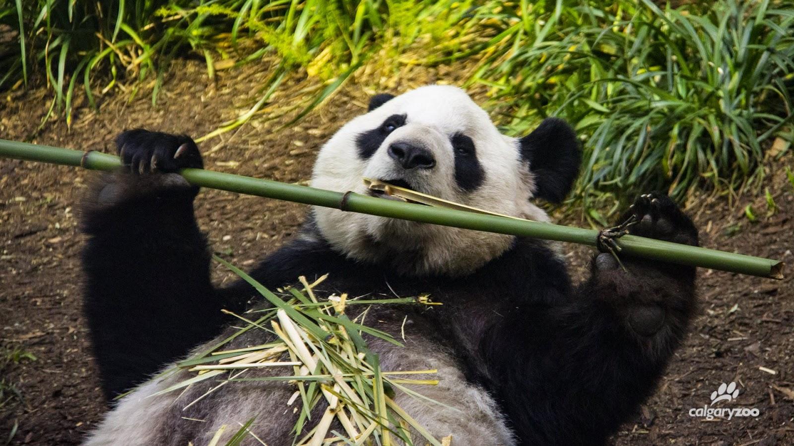 20200513-fresh bamboo.jpeg
