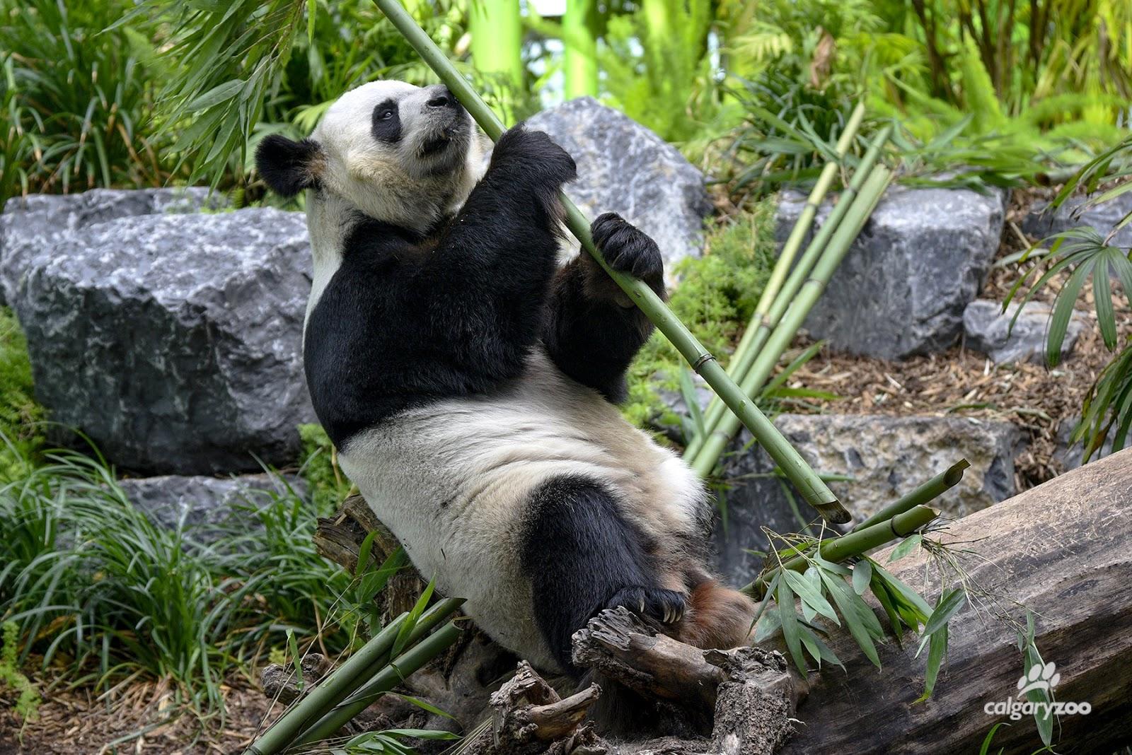 20200513-looking at bamboo.jpeg