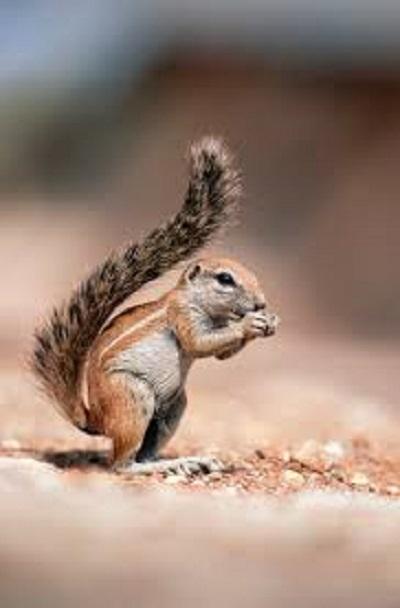 20200608-squirrel.jpg