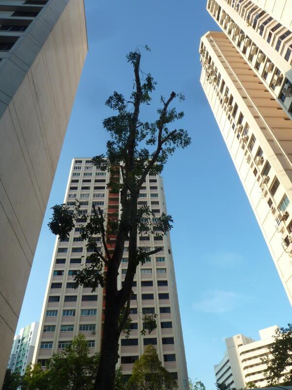 20200622-chop tree.jpg