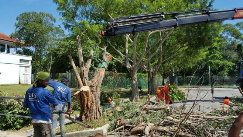 20200622-trees pruning.jpg
