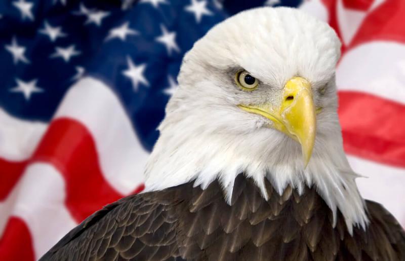 20200810-bald eagle.jpg