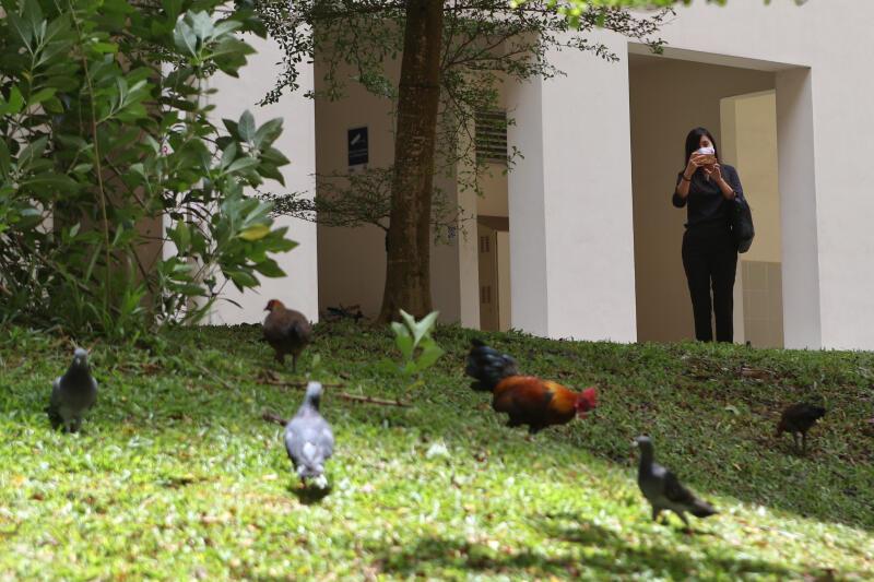 20201009-HDB Chicken.jpg