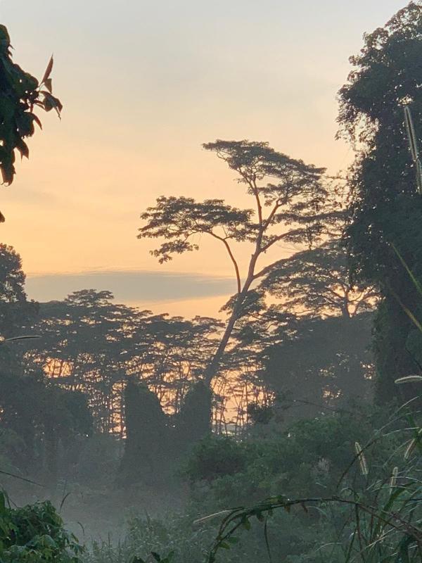 20201105-clementi forest.jpg