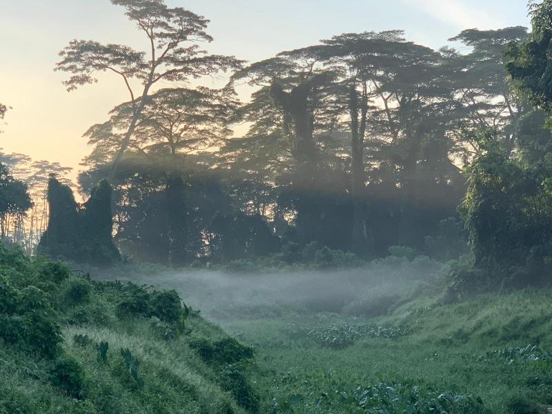 20201105-clementi forest02.jpg