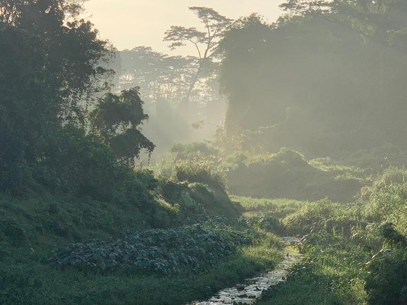 20201105-clementi forest07.jpg