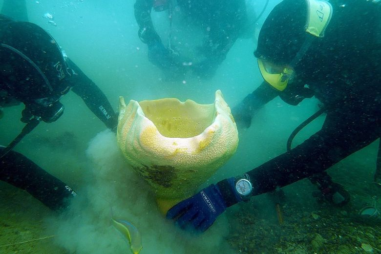 20201106-Neptune cup sponge.jpg