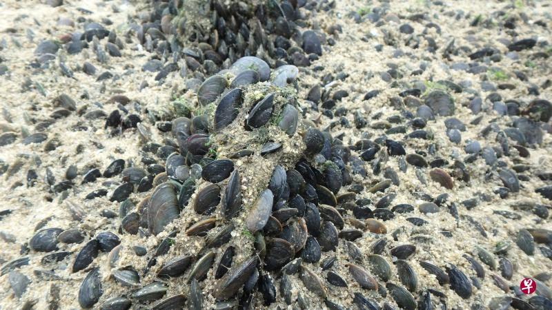 20201109-clams.jpg