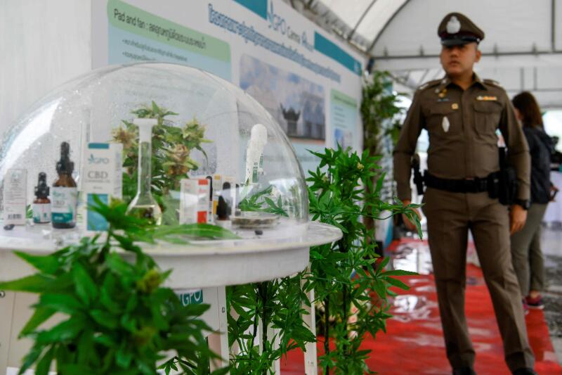 20201209-Thai Cannabis AFP.jpg