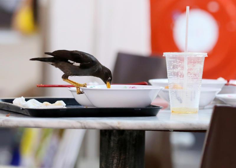 20210119-food for birds.jpg