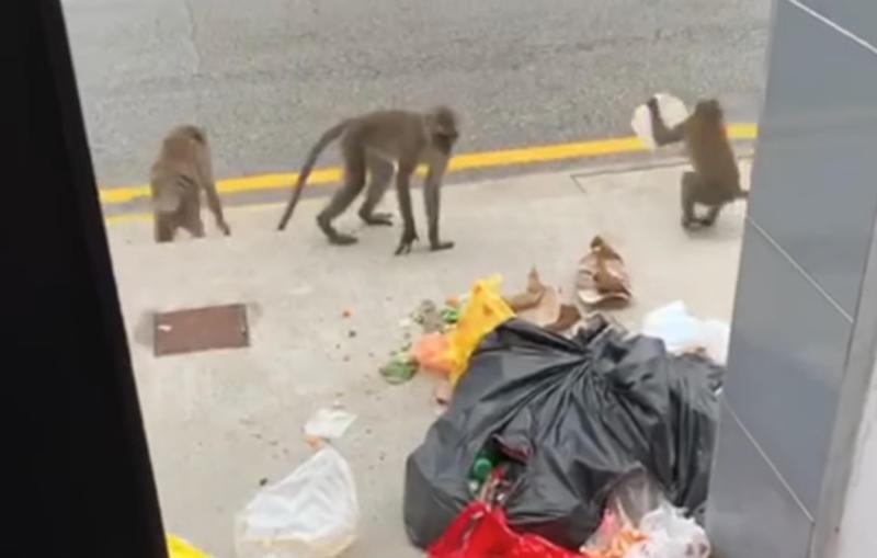 20210119-monkeys.jpg