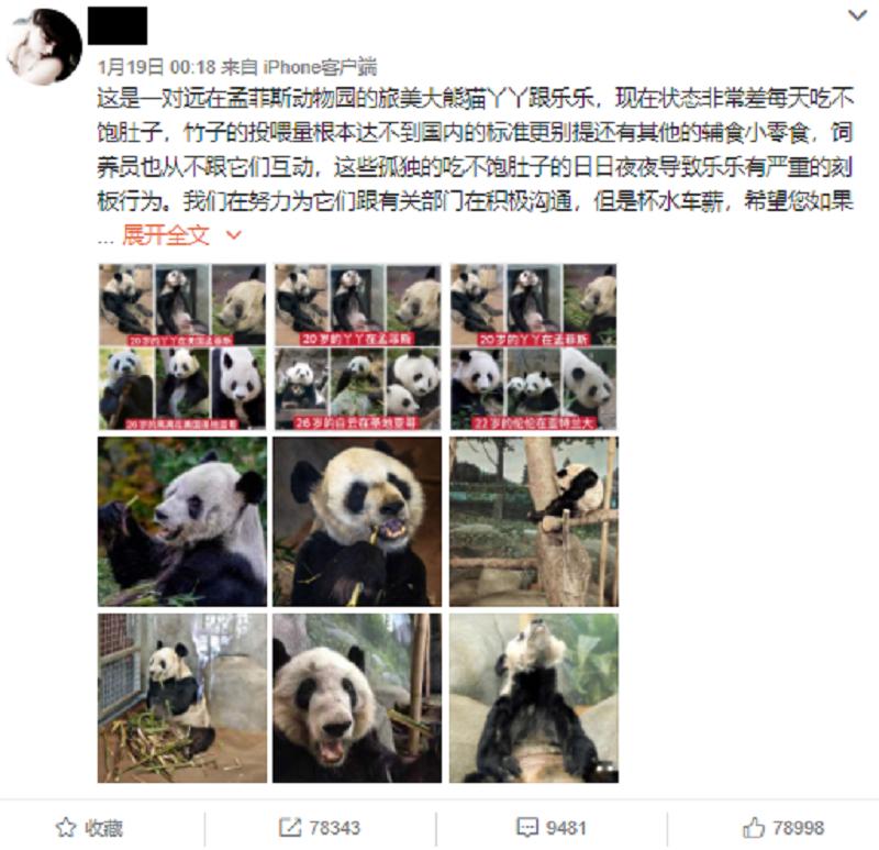 20210122-gumi pandas.png