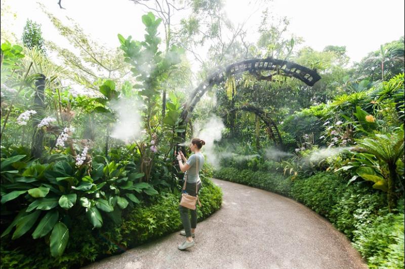 20210210-Mist Garden.jpg