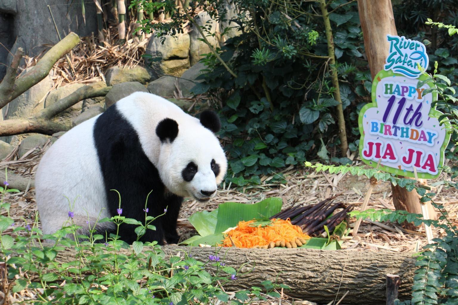 20210308 - Panda (1).jpg
