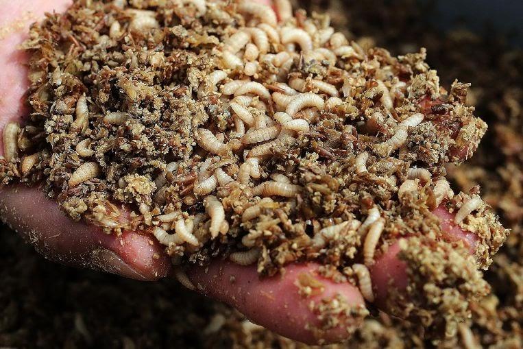 18032021 一堆虫子啃啊啃啊.jpg
