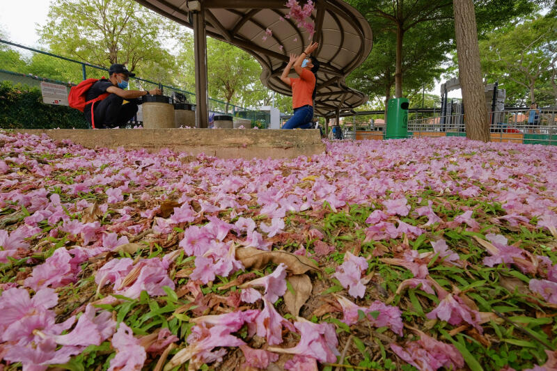 20210401-flower on the floor.jpg