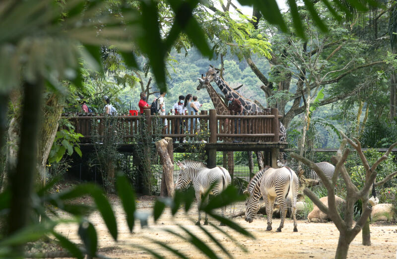20210406 - Singapore Zoo (ZB).jpg
