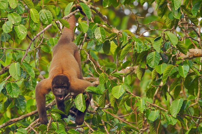 20210409 - Monkey.jpg