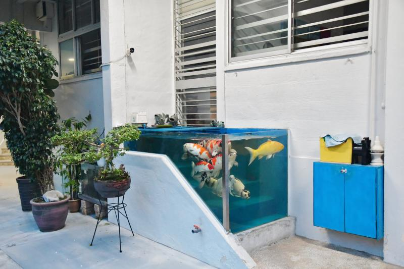 20210415-fish tank.jpg