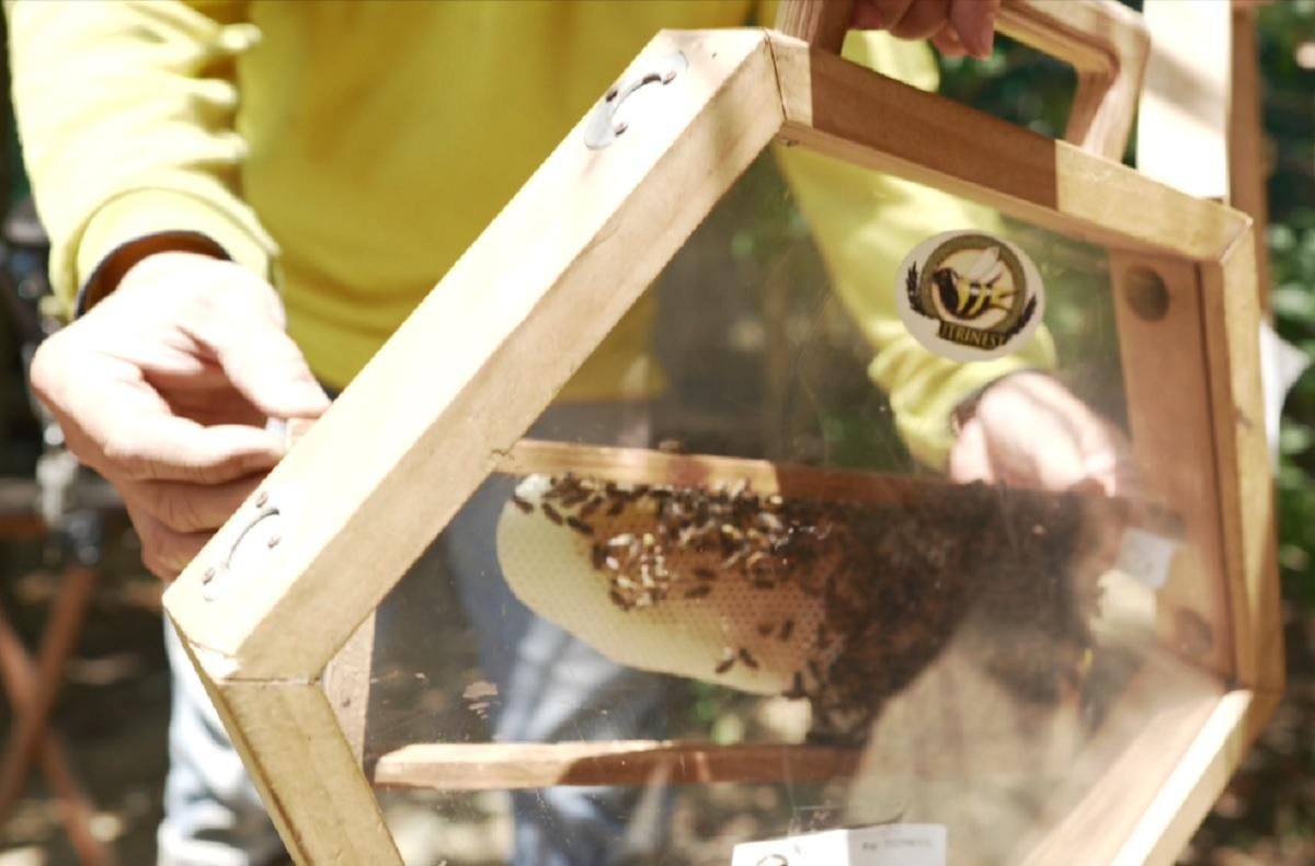 20210430-Bees Main Cover.jpg