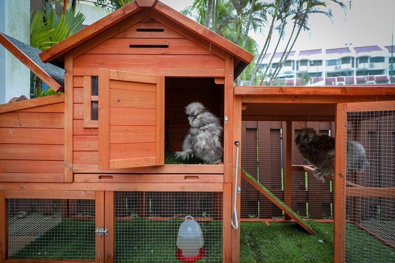 20210611-chicken coop ZB.jpg