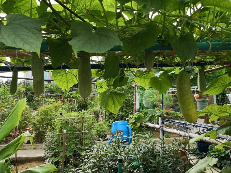 20210611-vegetable farms WB.jpg