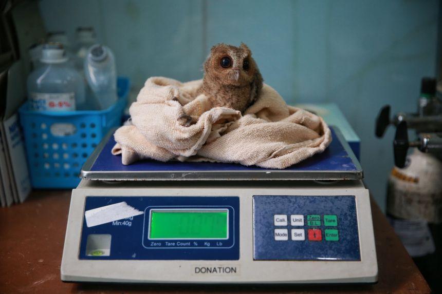 鸟病了也能看专科